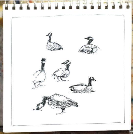 birds, sketch, draw, city